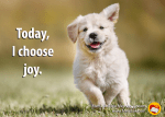 """Happy puppy with quote """"Today, I choose joy."""""""