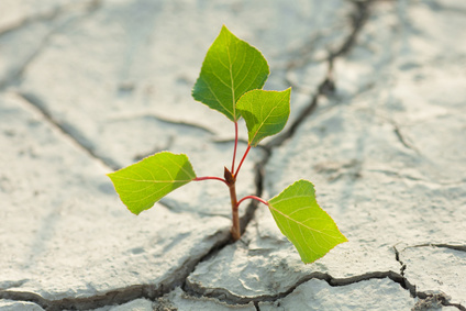 A small plant in a dry piece of land showing hope in God pays off.